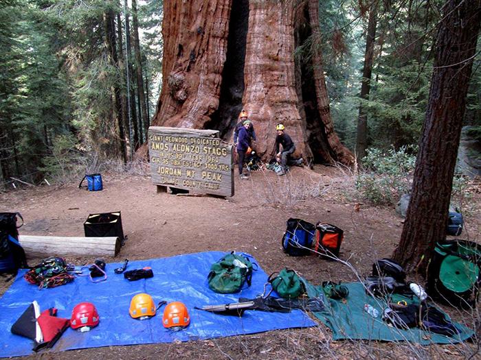 Big Trees Big Impact Indiegogo