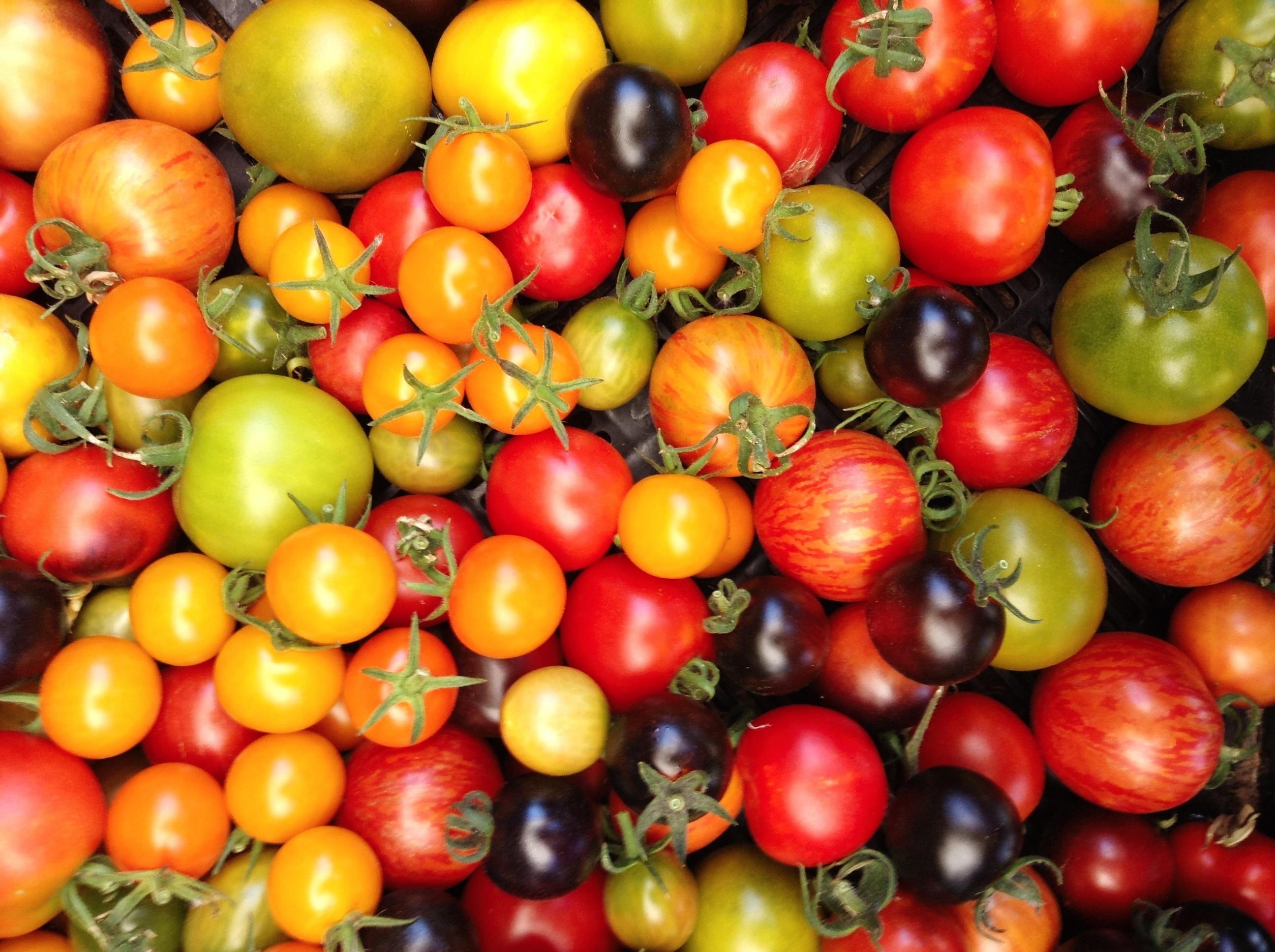 Beautiful Tomatoes