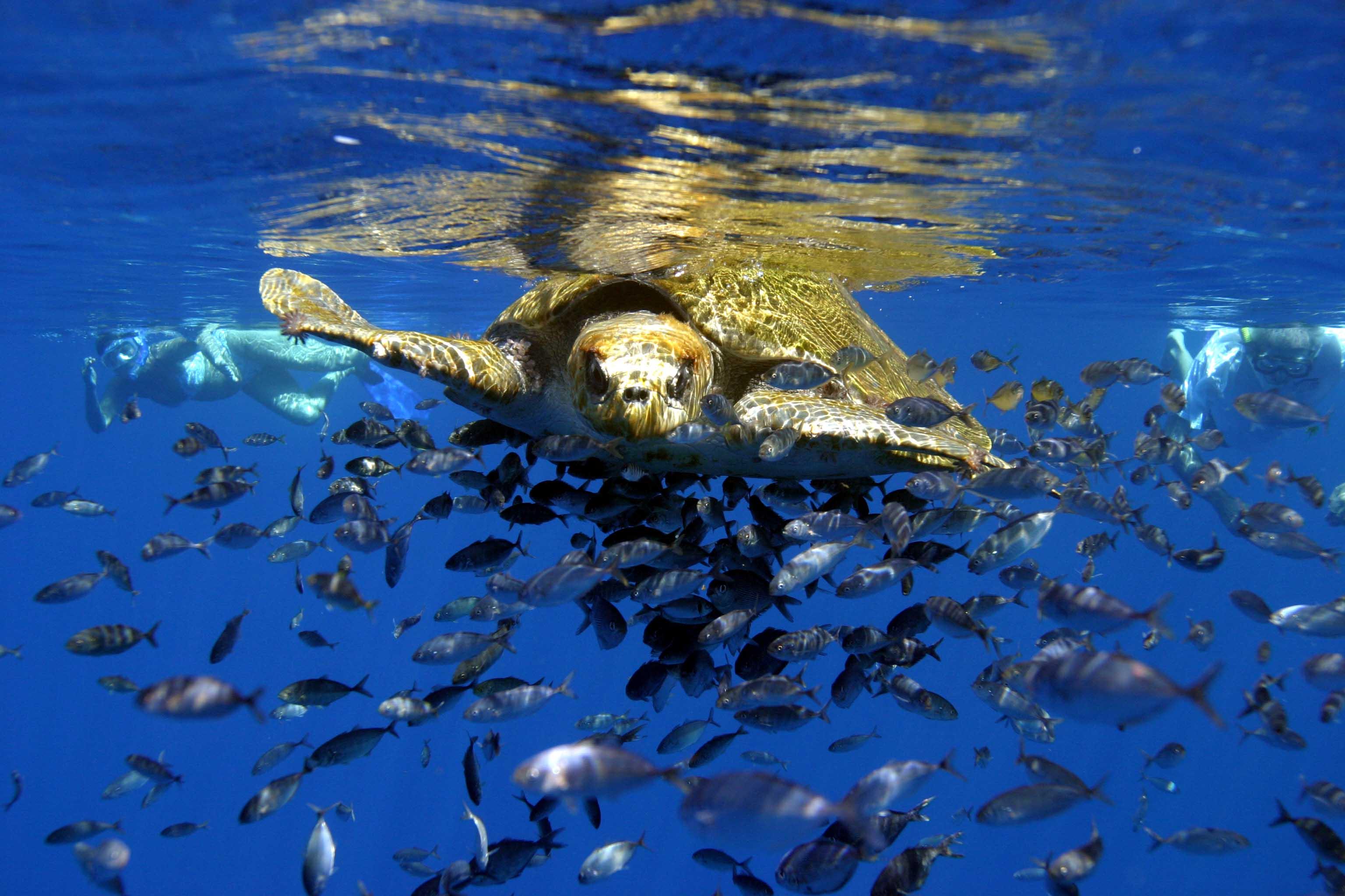 save dolphins whales u0026 sea turtles indiegogo