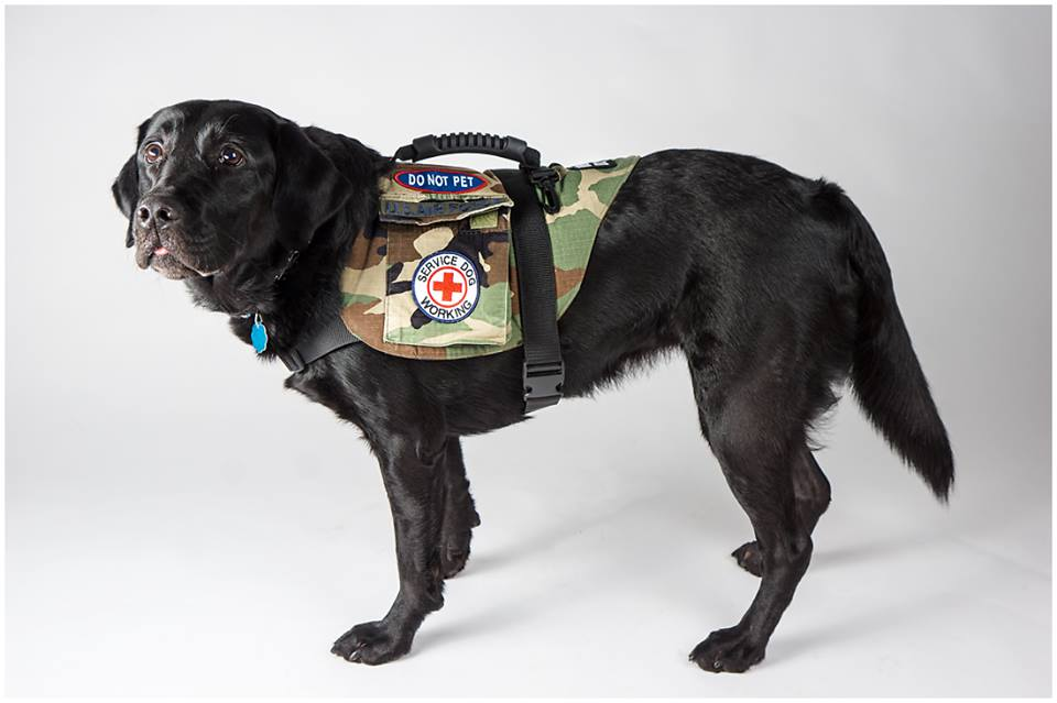 Small Ptsd Dog Patches