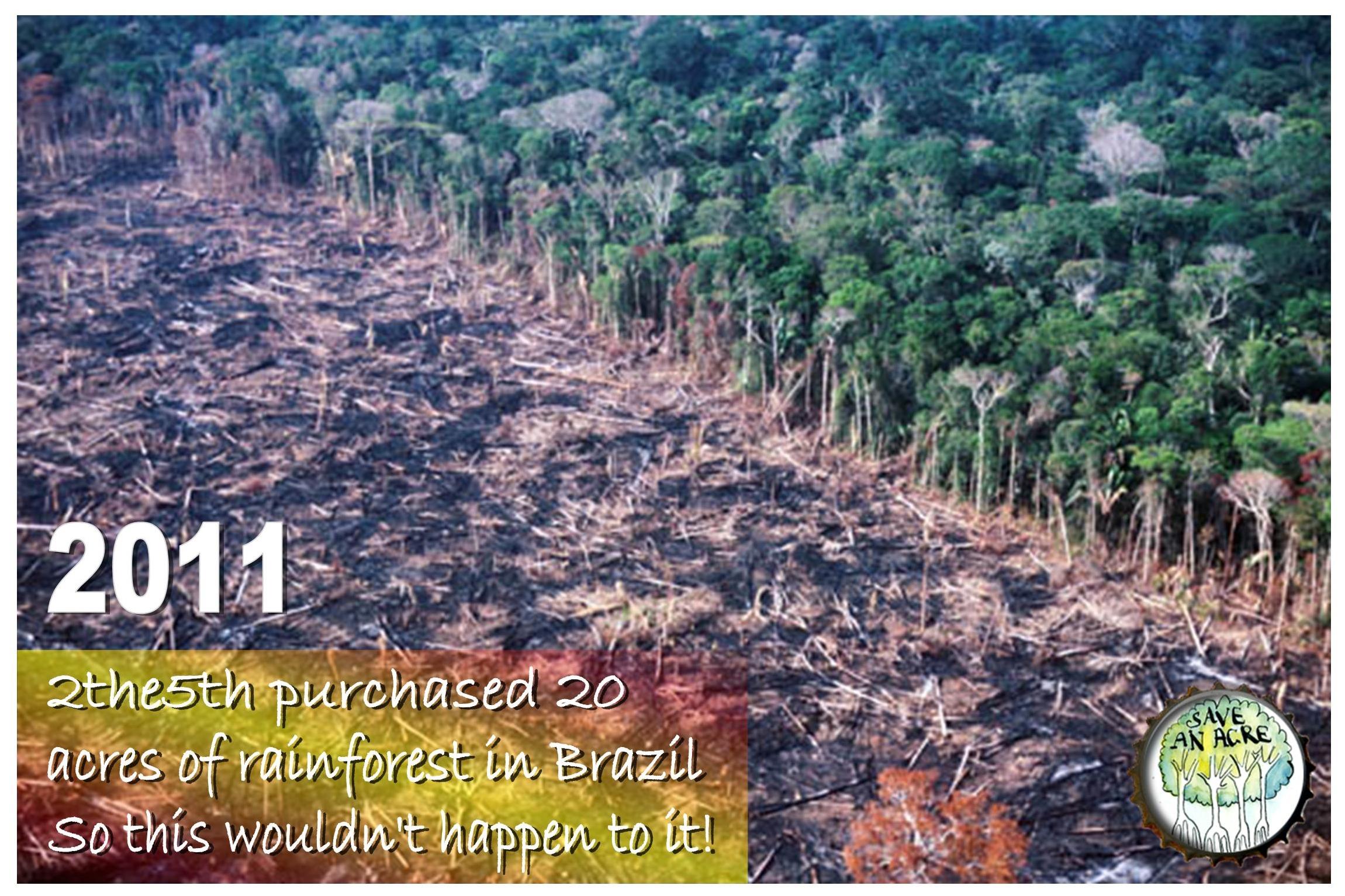 Destruction of forests essay