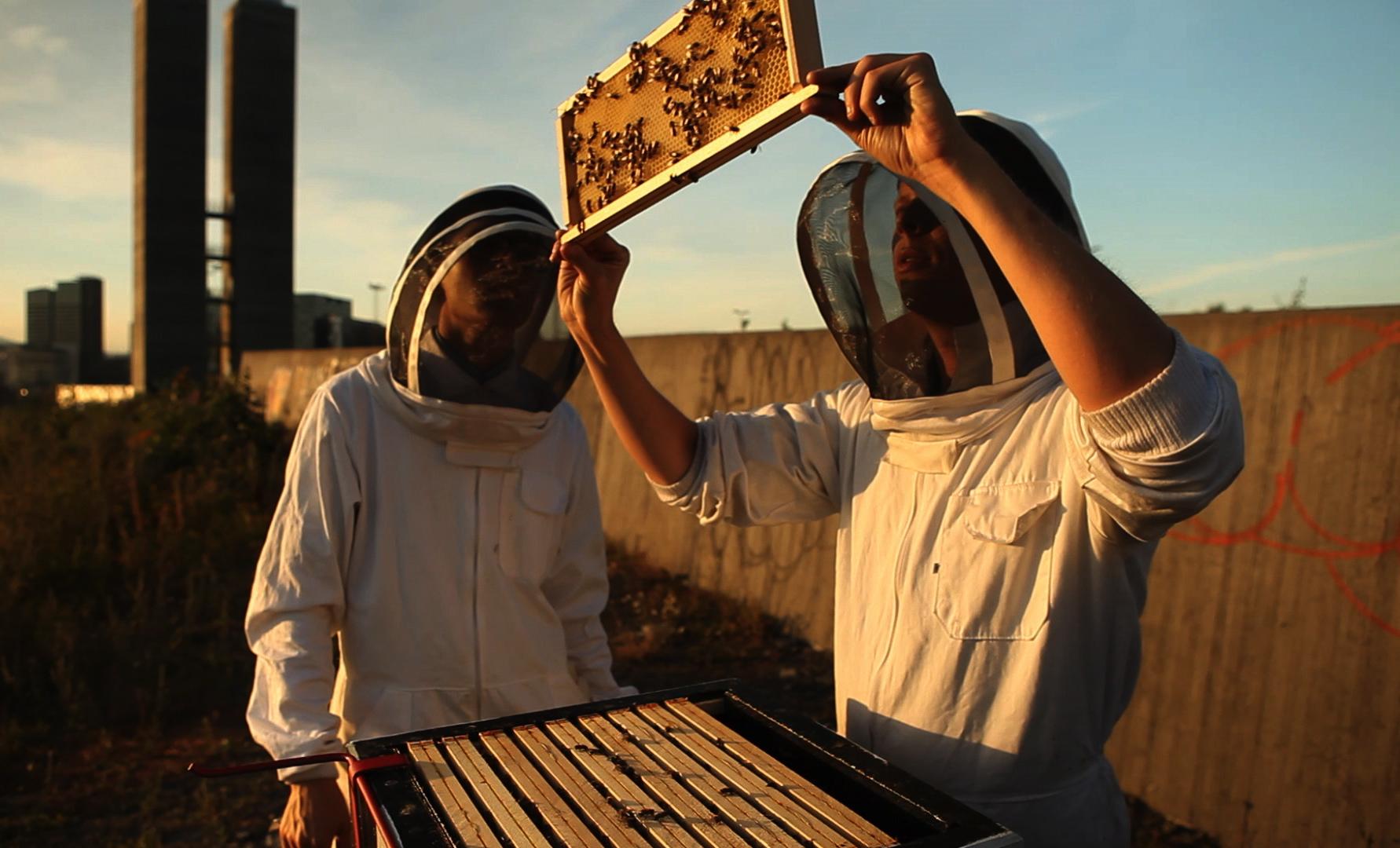 Картинки по запросу apiary on a roof