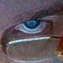 20120822155842-jdh_eye