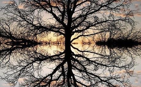 20121018170058-treereflection