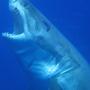 20121227160257-sharkfeed