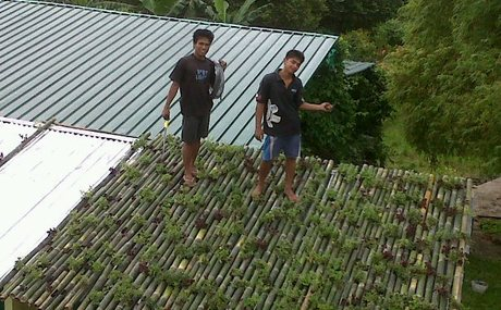 20130115175410-agricool_green_roof
