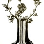 20130609114948-cjhub_tree_logo