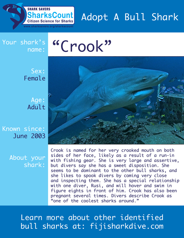 Shark photo fact sheet