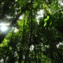 20120913221155-rainforest_canopy