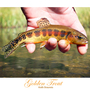 20130708102701-golden_trout__gt__print