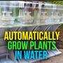 20131017082204-grow_plants_in_water_indiegogo