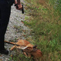 20130914084041-police-killing-fawn-photo.widecrop