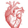 20131126145847-royalty-free-images-anatomy-heart-graphicsfairy-red1