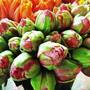 20140104173045-sm_field-growntulips_6720